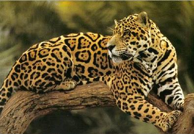 Great A Vida Dos Animais Selvagens